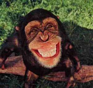 A monkey with a huge smile on its face